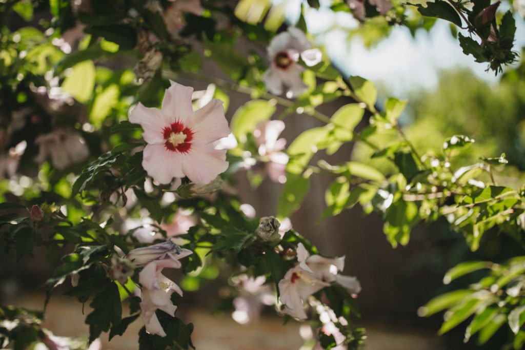 Repro Eko blossom